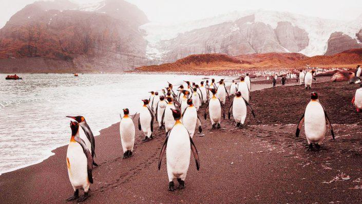 Esplorazioni Antartiche