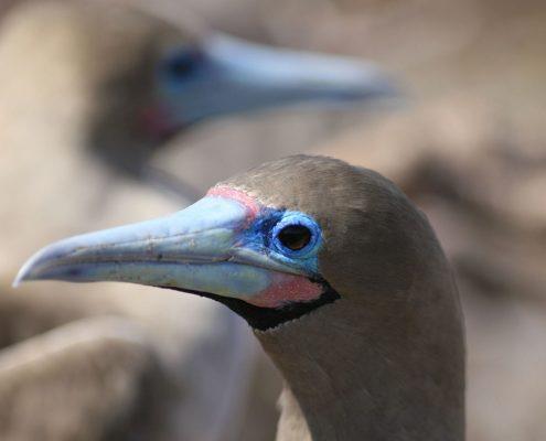 crociere-alle-galapagos-natura