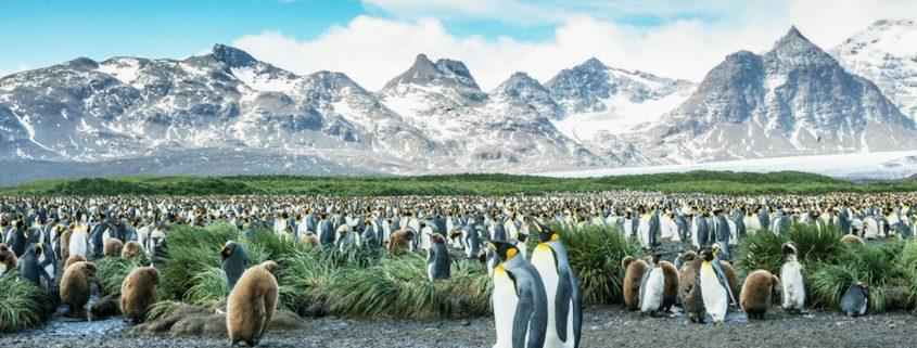 crociera-in-Antartide