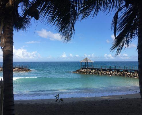 a-vela-ai-caraibi_st.vincent_palme
