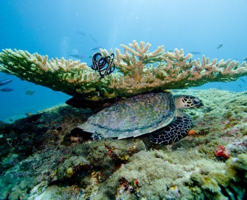 Le Maldive in barca corallo