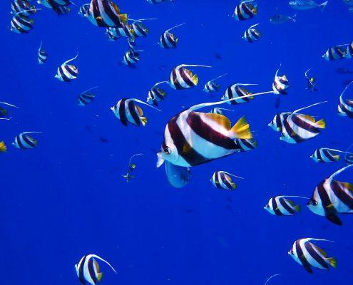 Le Maldive in barca pesci