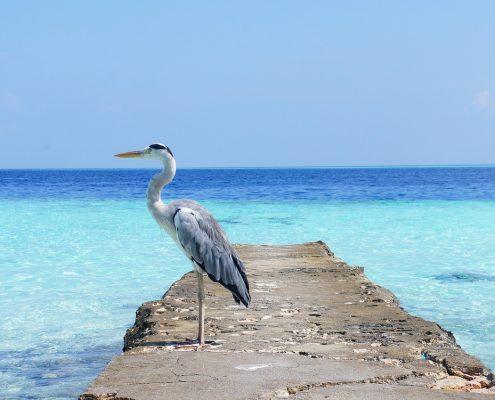 Le Maldive in barca ucello
