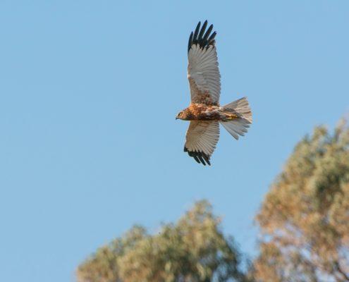 Noleggio barche a Ponza parco circeo falco
