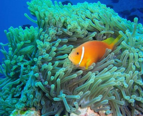 crociera ai caraibi maldives